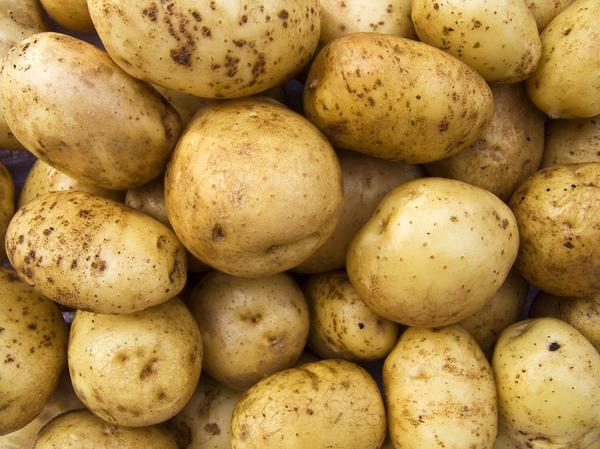 Парша на картофеле - распространенное явление, которое многие даже не считают серьезной болезнью
