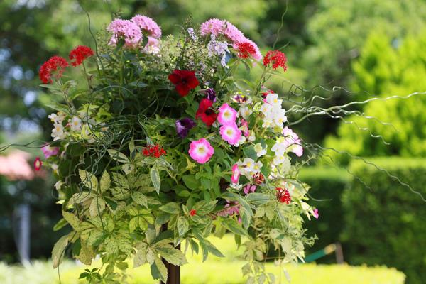 Как из множества привлекательных цветов выбрать лучшие для своего сада?