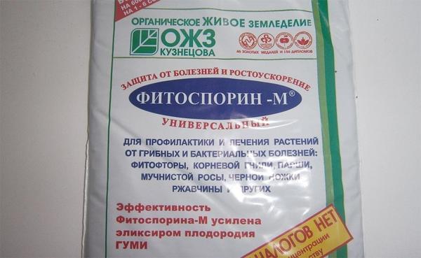 Паста Фитоспорин-М. Фото сайта tsveti-rasteniya.ru