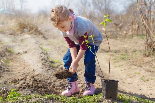 Девочка сажает миндальное дерево