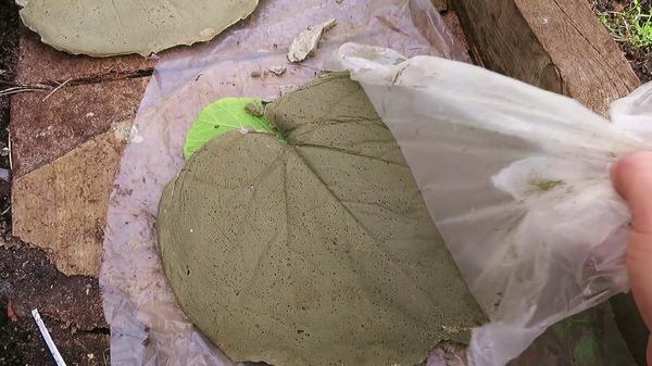 Через сутки убираем лист и снимаем полиэтилен