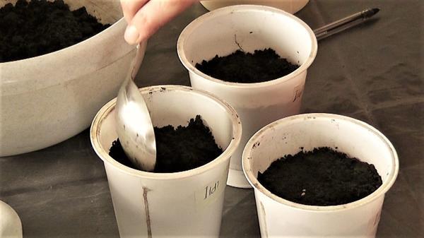 Посев на рассаду в индивидуальные стаканы