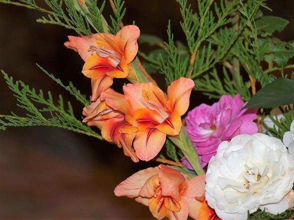 Мой золотоглазый гладиолус в композиции из цветов