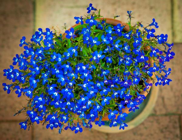 Необыкновенный синий цвет