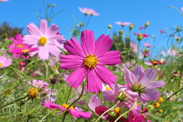 Где можно купить садовые цветы ботанический сад украины.купить цветы комнатные