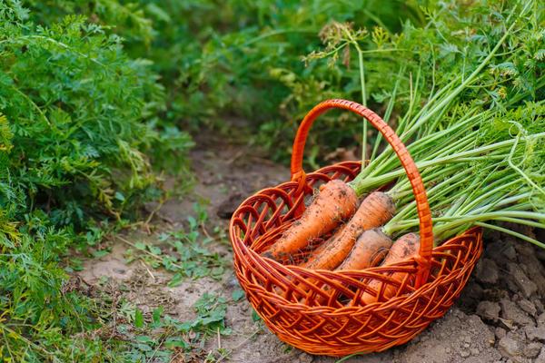 Собираем урожай