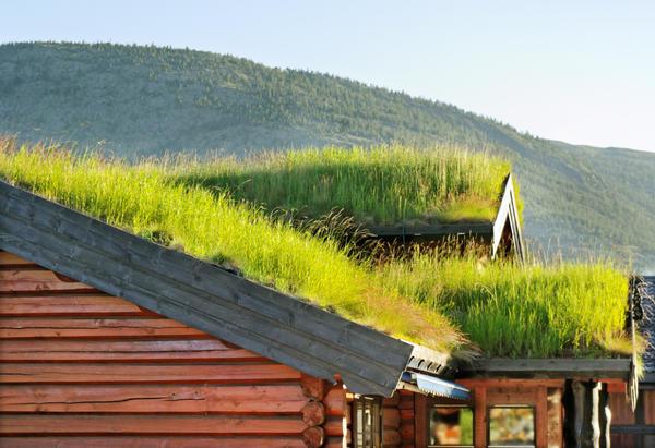 Зелёные крыши