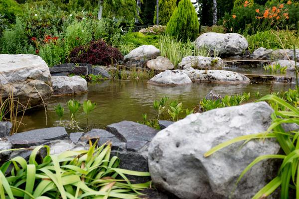 Оформление водоёма растениями