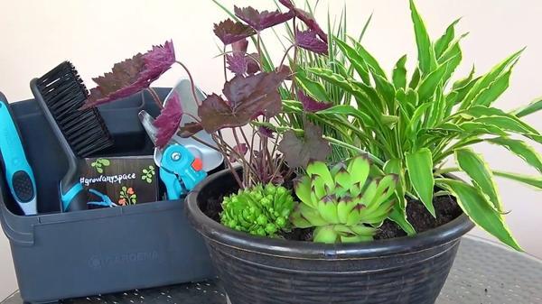 Набор инструментов от Gardena поможет цветоводу