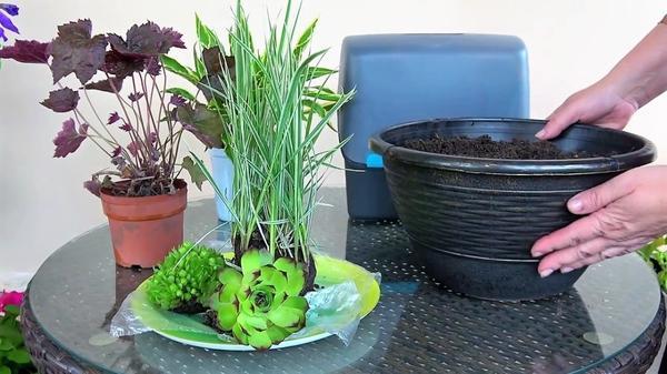 Декоративнолистные растения для высаживания в кашпо