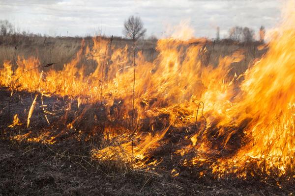 Не поджигайте сухую траву по весне!