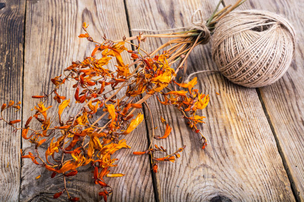 Засушенные цветы крокосмии обладают шафранным запахом