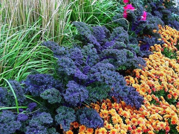 Капуста декоративная в осеннем саду. Фото с сайта ogorod.ru