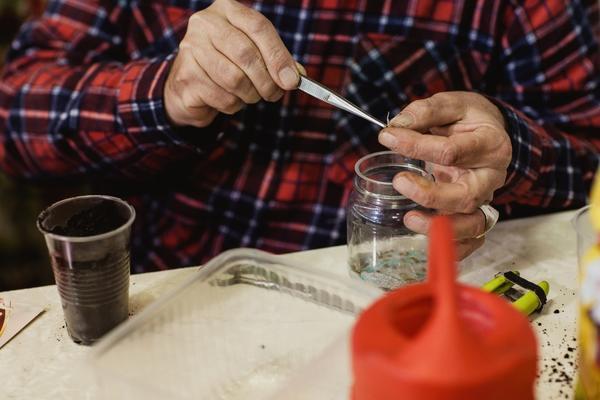 Сажать проклюнувшиеся семена удобнее пинцетом