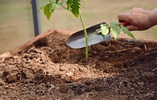Если почва сильно осела, подсыпьте в уровень с землёй