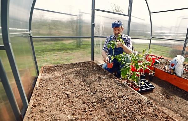 Готовить почву лучше с осени