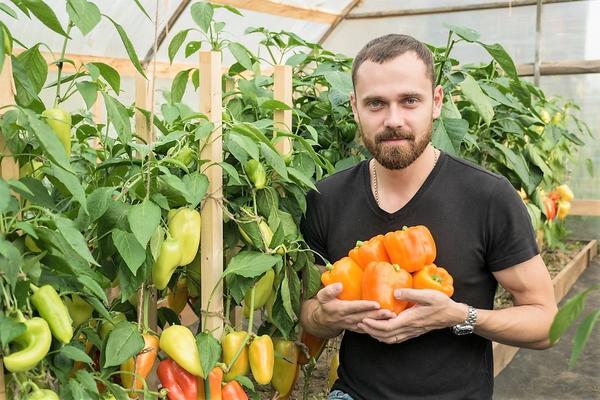 Директор агрофирмы Партнер В. И. Блокин-Мечталин советует всем овощеводам выращивать сладкий перец Аллар F1