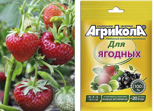 Агрикола для ягодных культур — хорошее средство для повышения урожая земляники