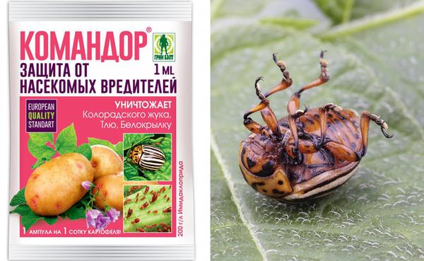 Командор — системный инсектицид, проверенный временем
