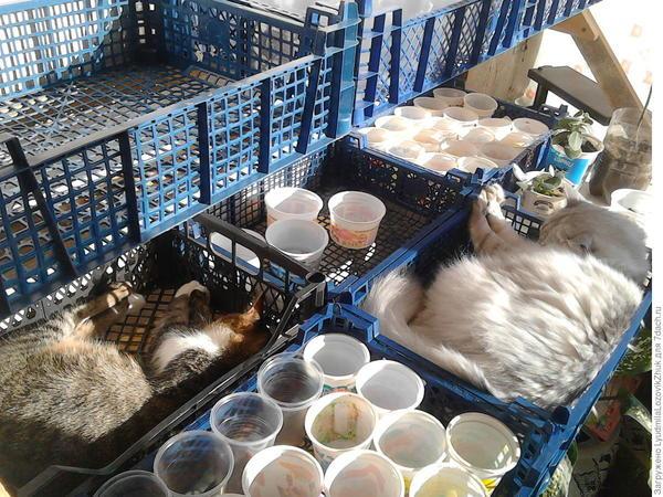 Рассадные ящики отлично подходят для кошек. Фото LyudmilaLozovikZhuk