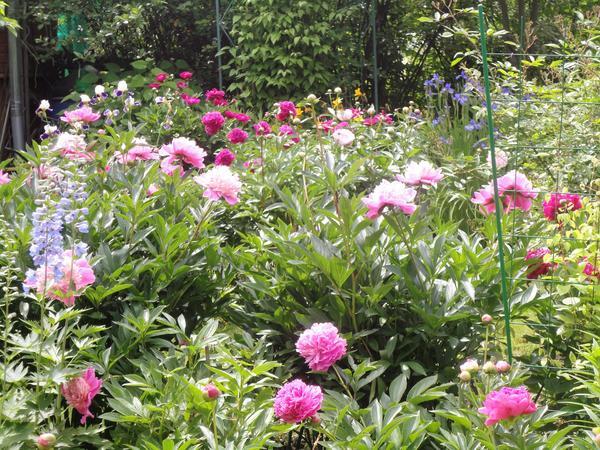 Важно, чтобы все растения в группе были одного роста. Фото автора