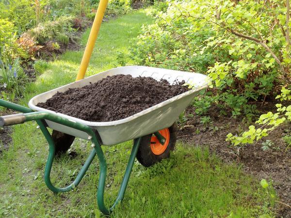 Готовый компост в тачке золото плодородия. Фото автора