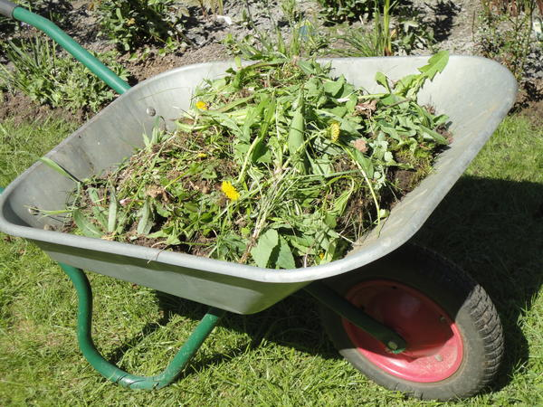 Размер ящика зависит от количества садовых отходов. Фото автора