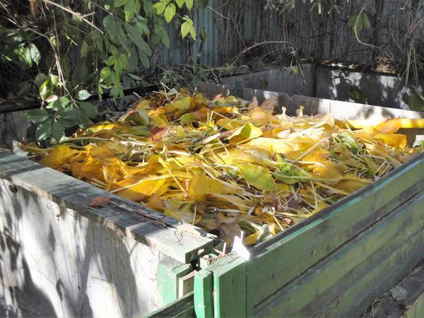 Осенью компостный ящик выглядит особенно красиво. Фото автора