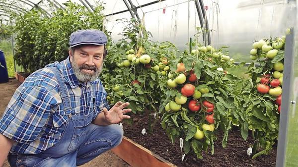 Плодов много, урожайность достойная