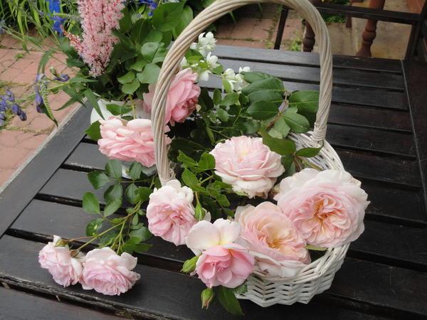 Шрабы отличаются обильным и продолжительным цветением. Фото автора