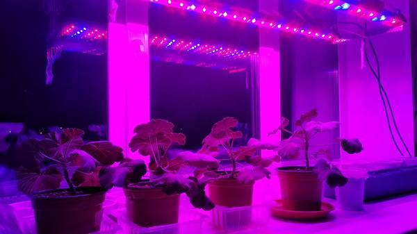 Светодиодная лампа отличное решение для досвечивания рассады