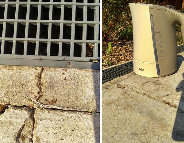 Самый простой способ борьбы с муравьями, но среди растений его применять нельзя. Фото автора