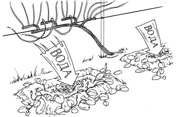 Каждая ванна может быть маленькой компостной кучей. Фото из книги Новейшая энциклопедия выращивания винограда Н. Курдюмова