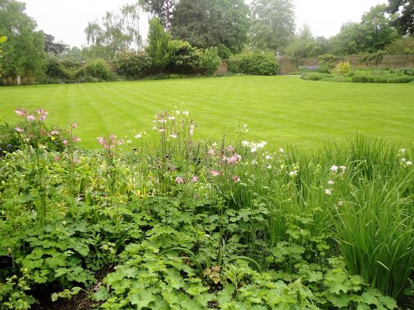 Так выглядит идеальный газон. Фото автора