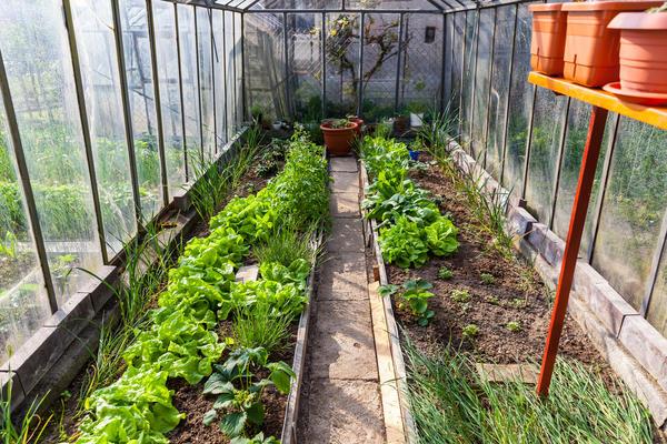 Решите, что вы намерены выращивать в теплице