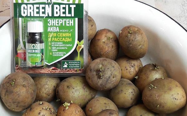 Обработка посевного картофеля