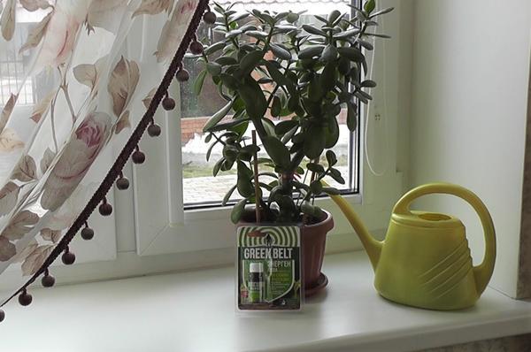 Энерген Аква применяется и в комнатном цветоводстве