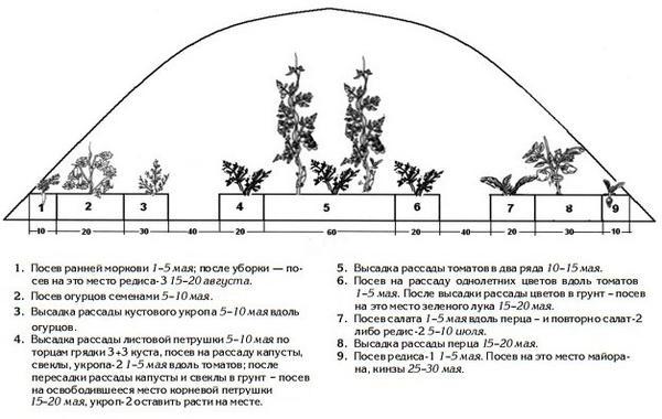 Последовательность заселения теплицы. Рисунок из книги Теплица-коммуналка. Как вырастить высокие урожаи томатов, перца, баклажанов и огурцов под одной крышей