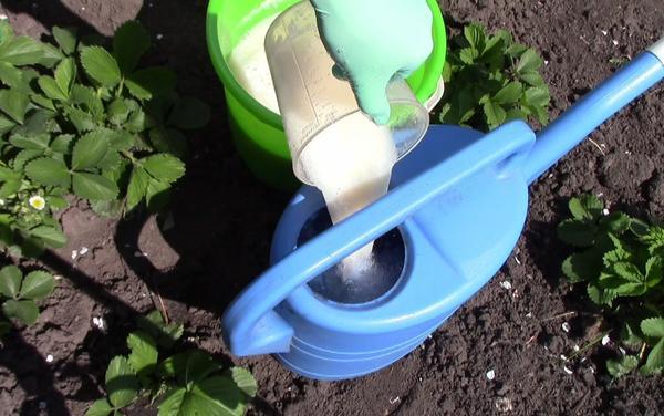 Дегтярное мыло в саду и огороде: необычные способы применения