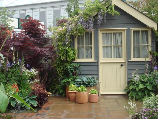 Хосты можно выращивать и в контейнерах. Фото автора