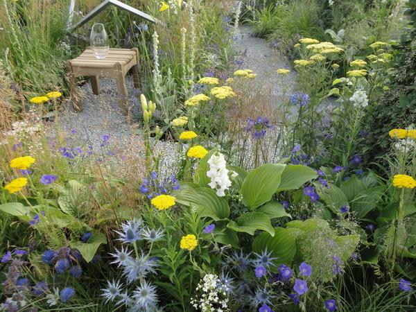 Хосты хороши как акценты в садах природного типа среди декоративных трав. Фото автора