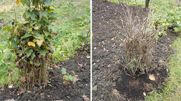 Плодовые деревья и кустарники осенью: обрезка и защита от зимних потерь