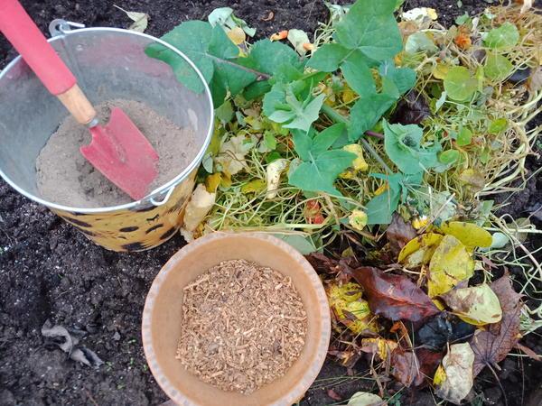 Для удабривания в первую очередь нужно использовать именно компост. Фото автора