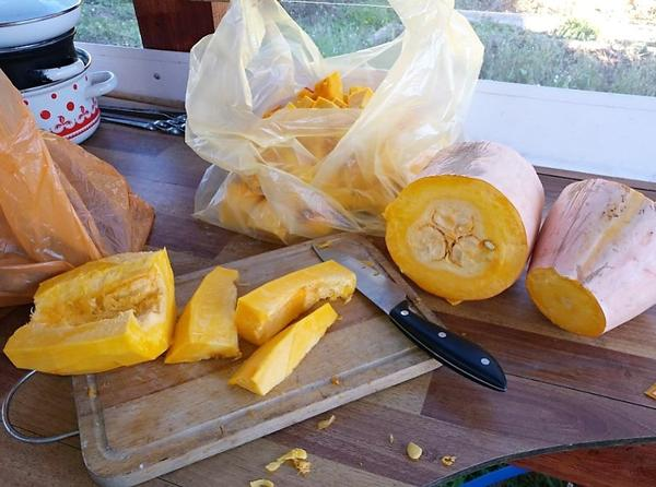 Какой сорт лучше: урожайные огурцы и кабачки