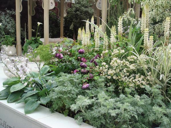 Профессиональный подбор растений, есть чему поучиться. Фото автора