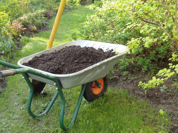 Готовый компост развозим по местам. Фото автора