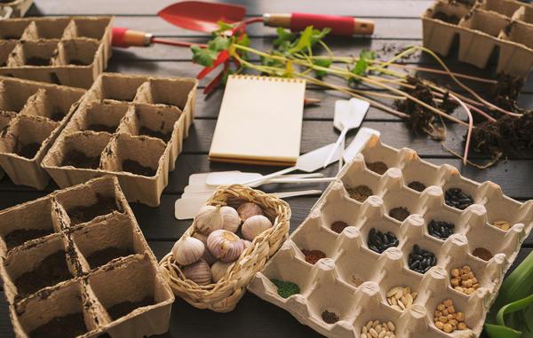 Семена к посеву нужно подготовить