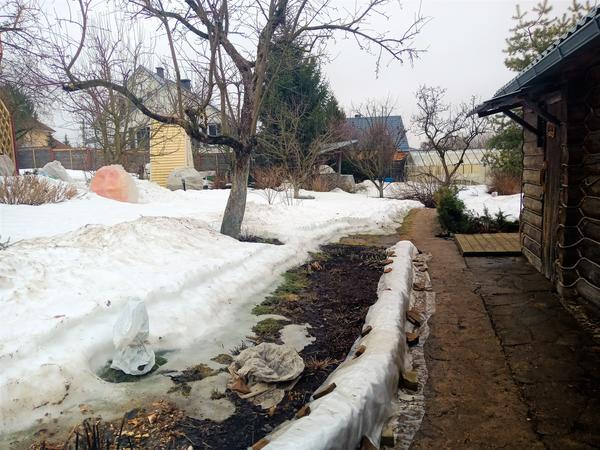 Начало апреля в саду. Фото автора