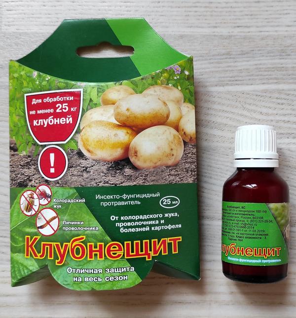 Как защитить картофель от проволочника. Сравниваем распространенные способы