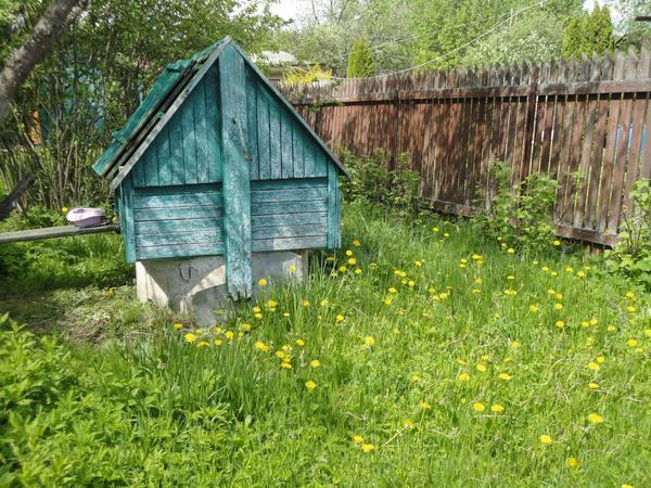 Сорняки неистребимые спутники садовода. Фото автора